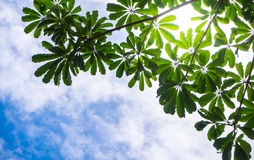 View up to the sky under the tree. View up to sky under the tree. sunlight on sky Stock Photo