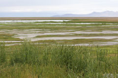 View of Utah marsh and reserve. View of wetland of Farmington Waterfowl Management Area, part of the Great Salt Lake Western Hemisphere Shorebird Reserve. Area Stock Photo