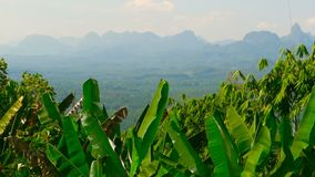 View of the valley with mountains in the background. Rocks on the horizon with banana palm leaves in the foreground. Typical Asian Landscape. Virgin nature of stock footage