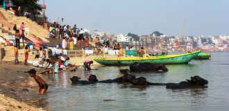 View of Varanasi with boats, buffalos and ghats with peoples bathe in sacred Ganga River Royalty Free Stock Photo