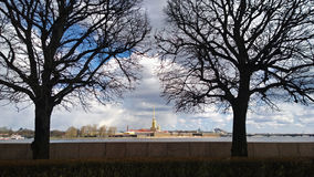 View from Vasilevsky island on the far Petropavlovskiy Cathedral in St. Petersburg with two trees in the foreground Royalty Free Stock Image