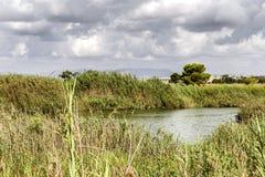 View of vegetation in the river in a clouded day.Spain.Alicante,Guardamar del Segura. Landscape of vegetation in the river in a clouded da . Guardamar del Segura stock photos