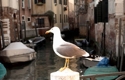 View of Venice, Italy. Stock Photography
