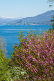 View of Verbania landscape Stock Image