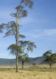 View of the view Ngorongoro Crater, tanzania Stock Images