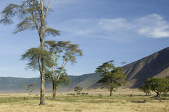 View of the view Ngorongoro Crater, tanzania Royalty Free Stock Photo