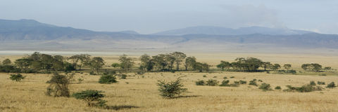 View of the view Ngorongoro Crater, tanzania Royalty Free Stock Images