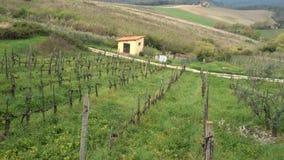 Vineyards of Toscana stock video