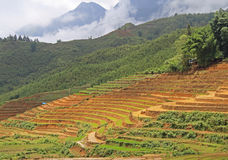 View of village CatCat with rice terraces Royalty Free Stock Photography