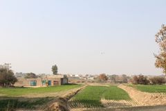 A view of village life and fields with houses. Green fields in country of Punjab, stork in the fields of Punjab, with beautiful colors, landscape, trees, heron Royalty Free Stock Image