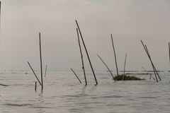 Water with reeds in a lake. View of a village of wooden houses and stilt houses on the inle lake. Myanmar royalty free stock photo