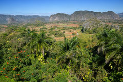 View of Vinales Valley in Pinar del Rio Province, Cuba Stock Photography