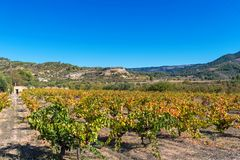 View of the vineyard on the background of a mountain landscape, Siurana, Tarragona, Catalunya, Spain. Copy space for text.  stock photo