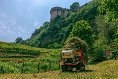 View of the vineyard and the castle wall stock photos