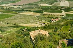 View of vineyard and green field. Montalcino countryside, Tuscany, Italy. Beautiful view of vineyard and green field. Montalcino countryside, Tuscany, Italy royalty free stock image