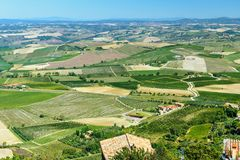View of vineyard and green field. Montalcino countryside, Tuscany, Italy. Beautiful view of vineyard and green field. Montalcino countryside, Tuscany, Italy royalty free stock photos