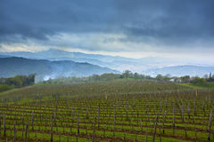 View on vineyard Stock Images