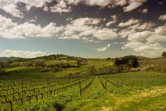 Vineyard on the hills of Chianti in Tuscany during summer. View Vineyard on the hills of Chianti in Tuscany / Italy during summer stock images