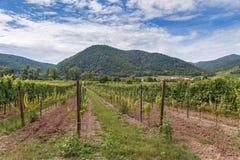 Vineyard near Durnstein, Austria. View of vineyard and hills near Durnstein, Austria stock images