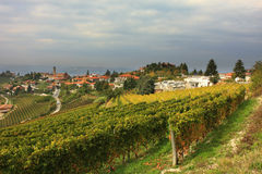 View on vineyard in northern Italy. Royalty Free Stock Image