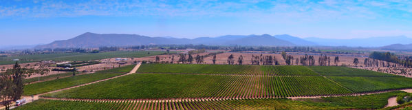 View of the vineyard Royalty Free Stock Images