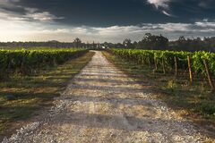 View of Vineyard Road during Daytime Royalty Free Stock Photo