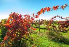 View of vineyard row Stock Photos