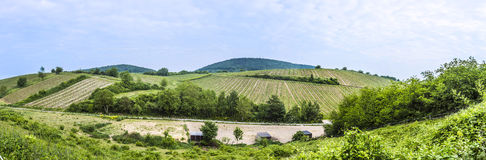View  of vineyard in spring time Stock Image