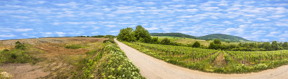 View  of vineyard in spring time Stock Photos