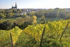 View from the vineyard to Kiedrich Stock Photos