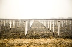 View at vineyard with white pillars on ground. View at vineyard with white pillars on ground Royalty Free Stock Photos