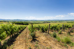 View of vineyards on clear summer day Stock Photo