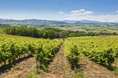 View of vineyards on clear summer day Stock Images