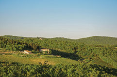 View of vineyards and hill with villa an forest at the top in the Tuscan countryside. View of vineyards and hill with villa an forest at the top in the Tuscan Stock Photo