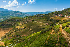 View of vineyards are on a hills Douro Valley Stock Photo