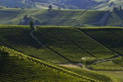 View of the vineyards in the Langa Piedmont hills. At sunset stock photos