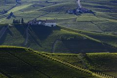View of the vineyards in the Langa Piedmont hills. At sunset royalty free stock image