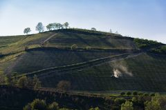 View of the vineyards in the Langa Piedmont hills. A view of the vineyards in the Langa Piedmont hills, a tractor is working in the middle of the grapes royalty free stock images