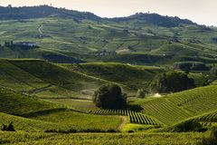 View of the vineyards in the Langa Piedmont hills. At sunset royalty free stock photo