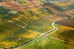View of vineyards of langhe hills in northern Italy on autumn full of bright colours Stock Images