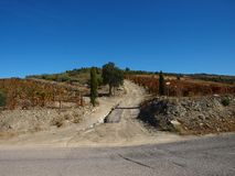 Douro river tipical wine fields road Portugal. View on vineyards meadows and farm road royalty free stock photography