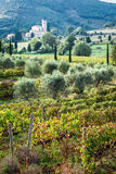 View of the vineyards and monastery in Tuscany. Italy royalty free stock photo