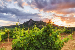 View of the vineyards and mountains Stock Photography