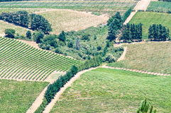 View of vineyards near Somerset West, South Africa Stock Photography
