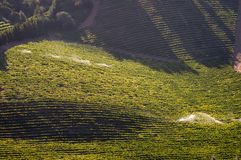 View of vineyards near Somerset West, South Africa Royalty Free Stock Image
