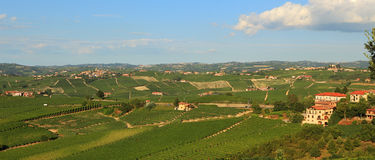 View on vineyards in northern Italy. Royalty Free Stock Photos