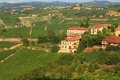 View on vineyards in northern Italy. Royalty Free Stock Photo