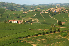 View on vineyards in northern Italy. Stock Photography