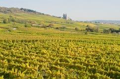 View of the vineyards in Rüdesheim am Rhein in the autumn Royalty Free Stock Photo