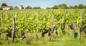 View of the vineyards of Saint Emilion, France. On a spring day royalty free stock image